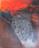 1972 Evasion rouge, oeuvre tactiliste, 1960-1972, 10F= 46 x 55 cm